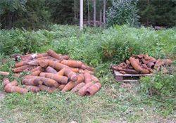 Stockpiled_ordnance_250_1